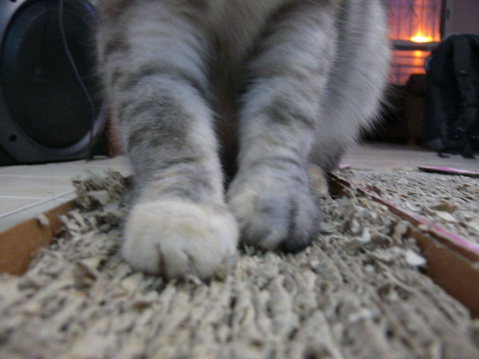 cat scratching on corrugated cardboard