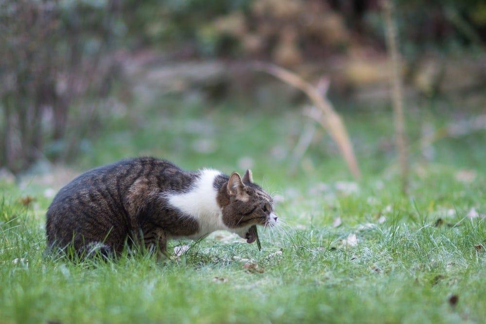 cat vomitting_Shutterstock_Nils Jacobi