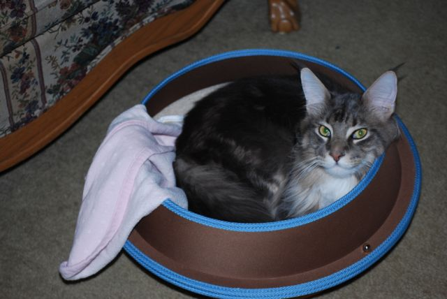 cat in hepper