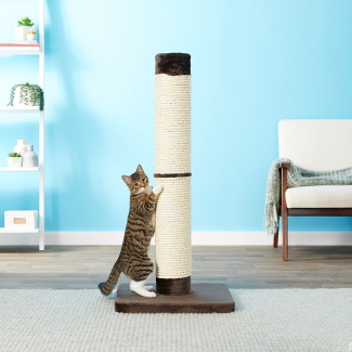 featured image cat post
