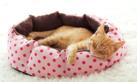 How To Clean Your Cat or Dog's Bed