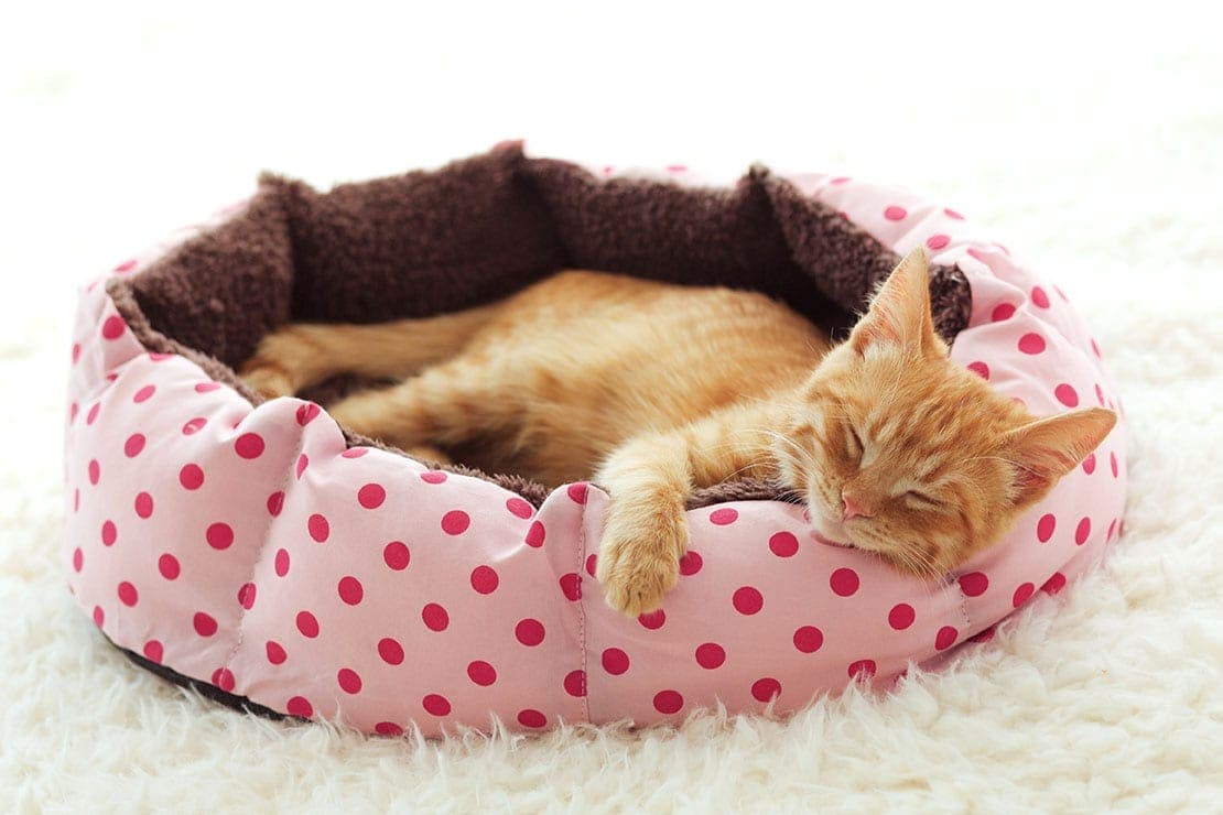 ginger cat sleeping in its bed