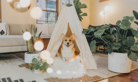 13 Pet-Oriented Home Décor Ideas You Will Love!