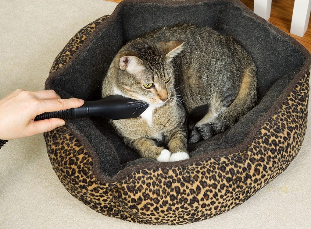 vacuuming cat and bed