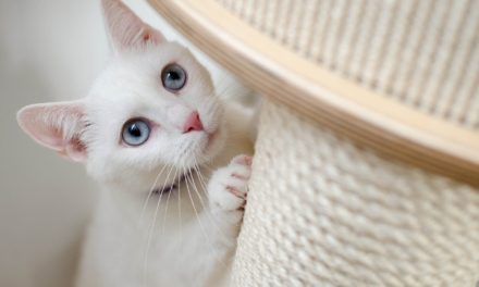What's the Best Material for a Cat Scratching Post?