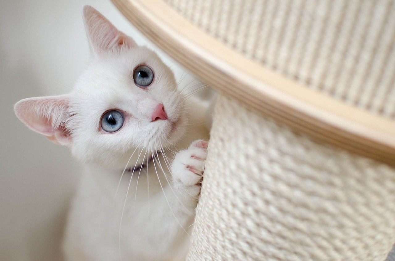 white cat and scratching post