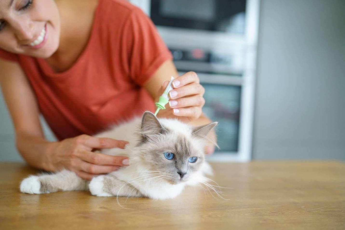 woman putting medication to cat