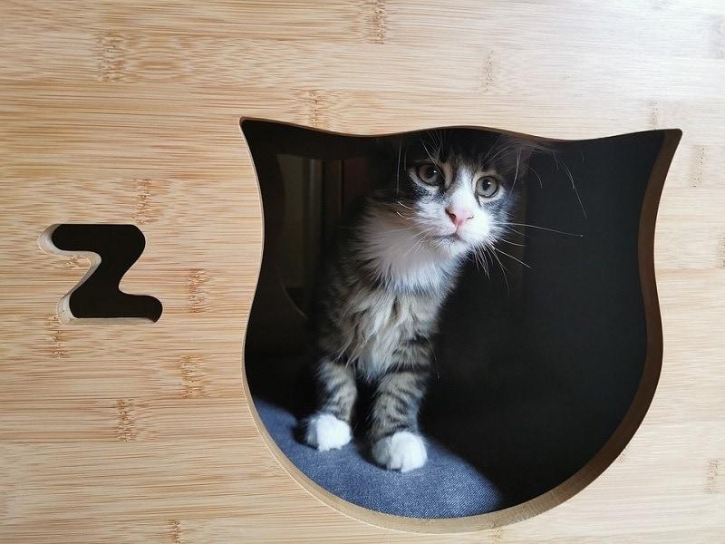 11cat