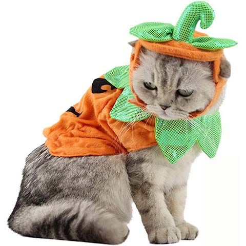 Bolbove Pet Pumpkin Costume
