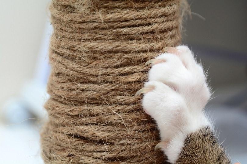 Cat-Scratching_Yimmyphotography_shutterstock