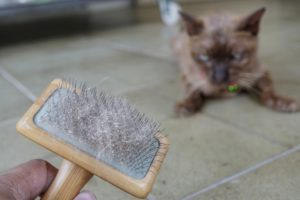Cat skin and hair on brush