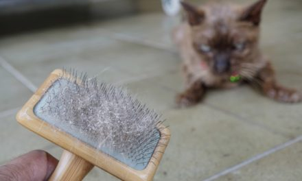 10 Best Cat Brushes in 2021 – Reviews & Top Picks