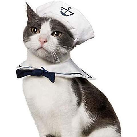Namsan Cat Halloween Costume