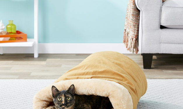 10 Best Self Warming Cat Beds in 2021 — Reviews & Top Picks