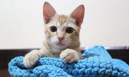 20 Free Crochet Cat Bed Patterns