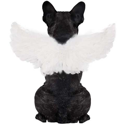 WeeH Pet Halloween Costume