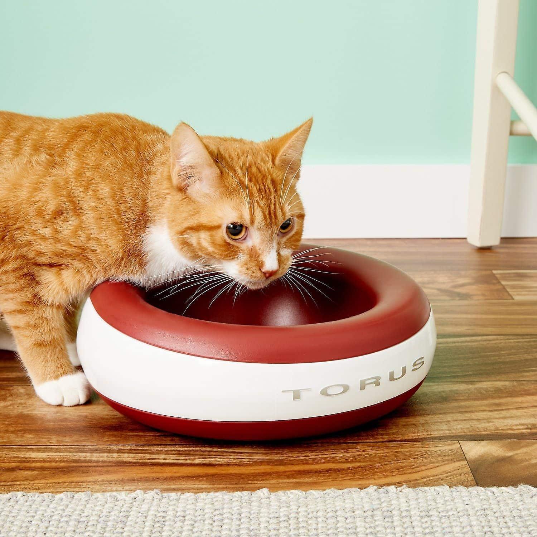 10 Best Cat Water Bowls in 2021 - Reviews & Top Picks thumbnail