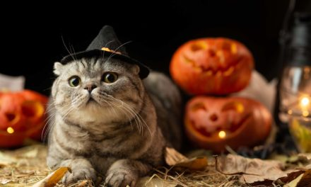 Best 10 Best Cat Costumes for Halloween 2021 – Reviews & Top Picks