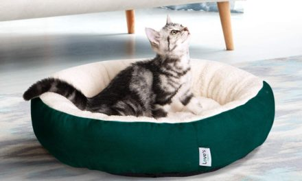 10 Best Cat Beds for Kittens & Smaller Cats in 2021 – Reviews & Top Picks