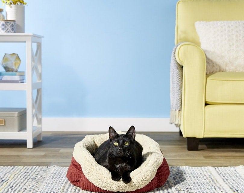cat self warming bed_Aspen pet_Chewy