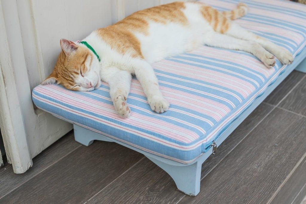 cat sleeping in bed outdoor