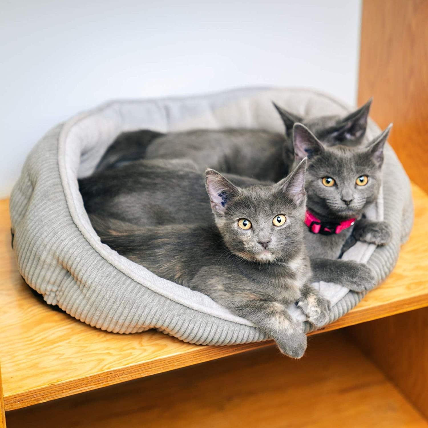 cats in Pet Craft Calming Cat Bed