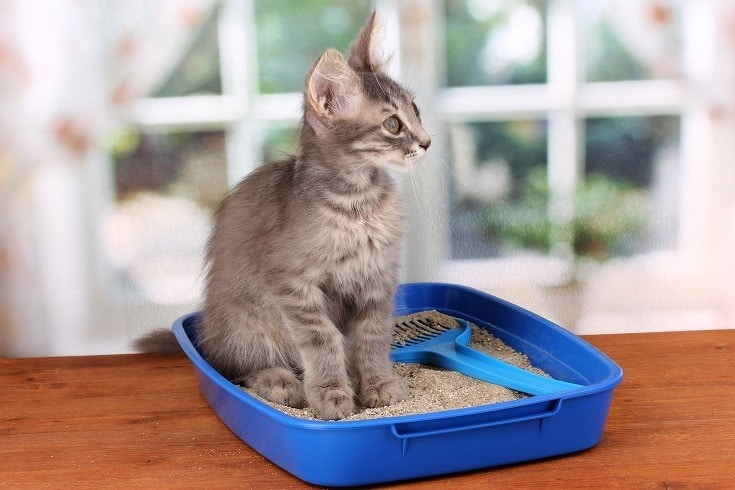 cat in sand litter