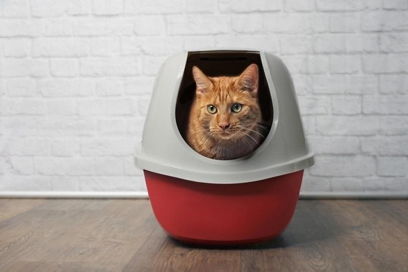 Ginger-cat-in-a-litter-boxLightspruch, Shutterstock_