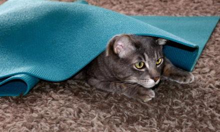 What Was the Neko Flies Cat Toy?
