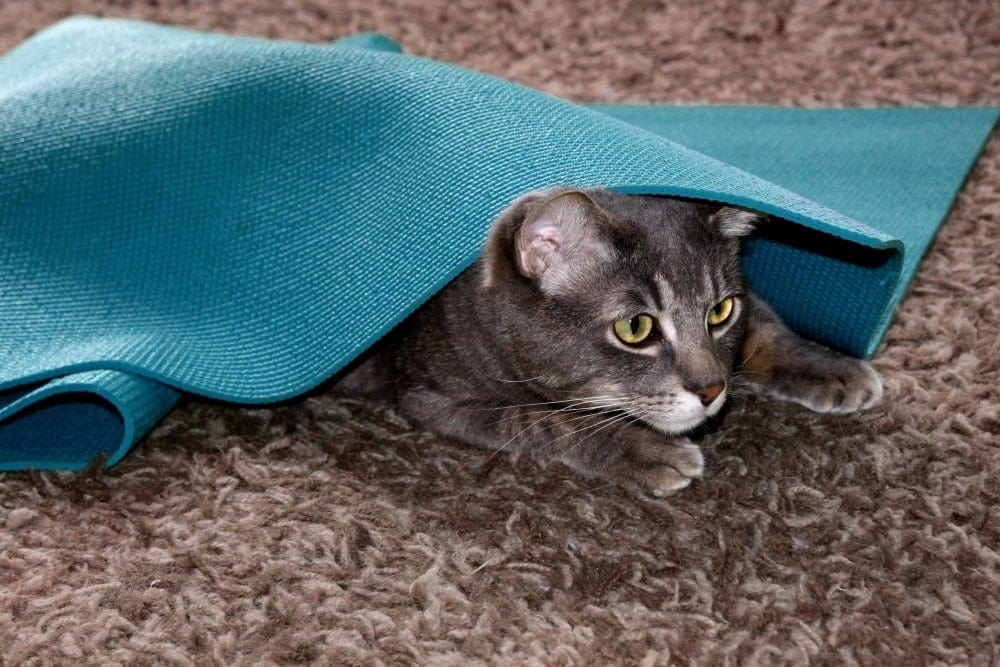 Neko Flies cat