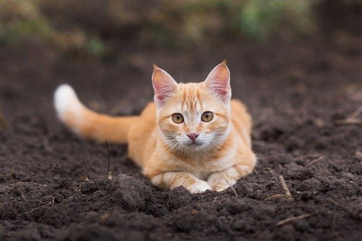 soil litter