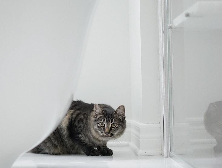 cat in the bathroom