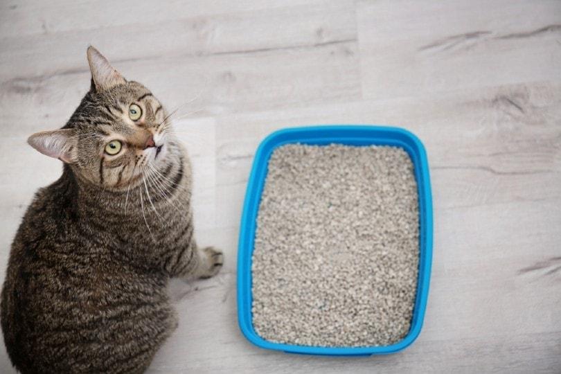 cat beside litter box