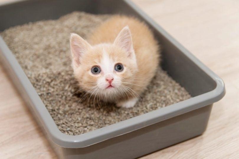 cat litter box_Nadya Buyanowa, Shutterstock