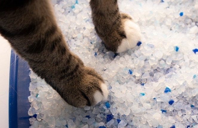 cats paws in crystal litter Natalia Hrynovets, Shutterstock