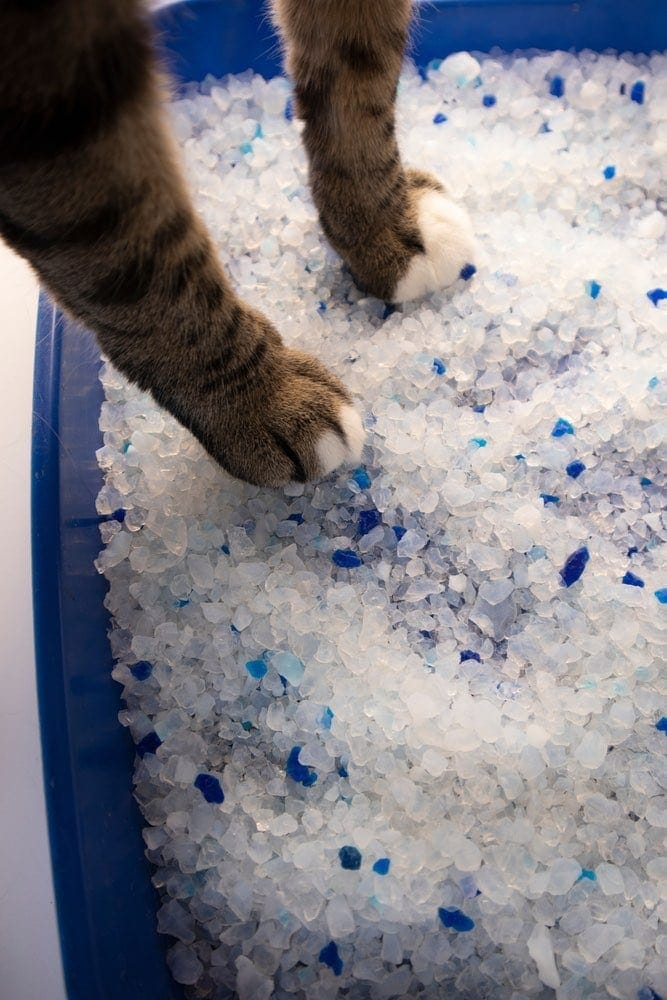 cats paws in crystal litter box