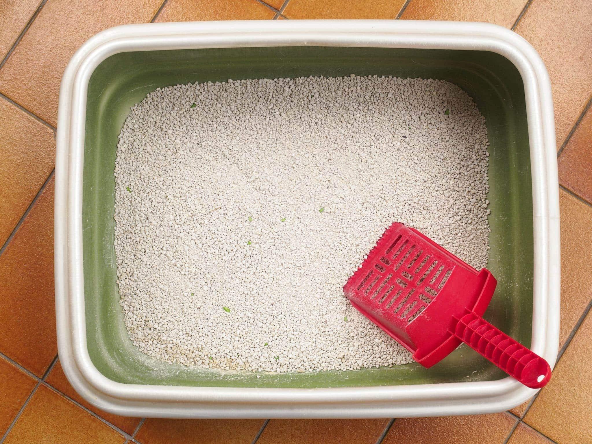 clean litter box_Enki Photo, Shutterstock