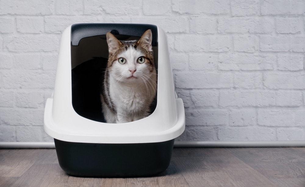 cute cat in large pod litter box