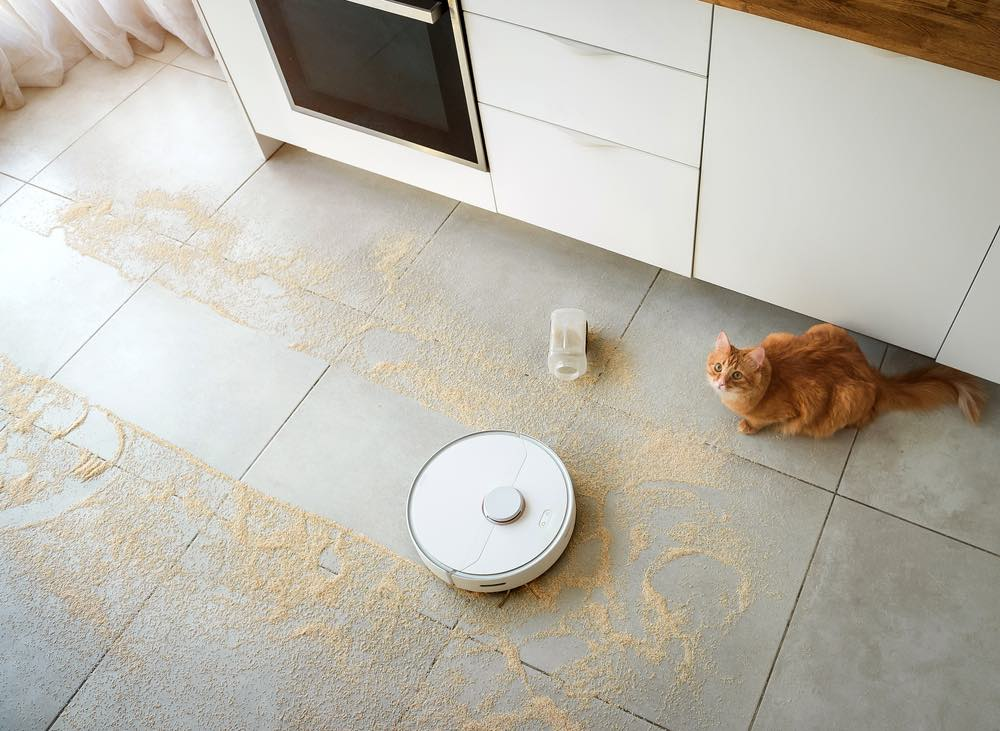 cute orange ginger cat watching vacuum roomba