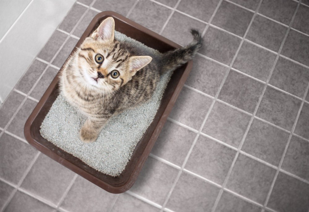 kitten in litter box looking up