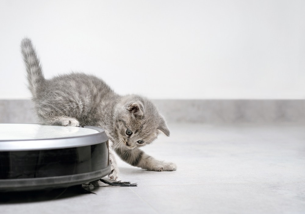kitten playing with robotic vaccuum