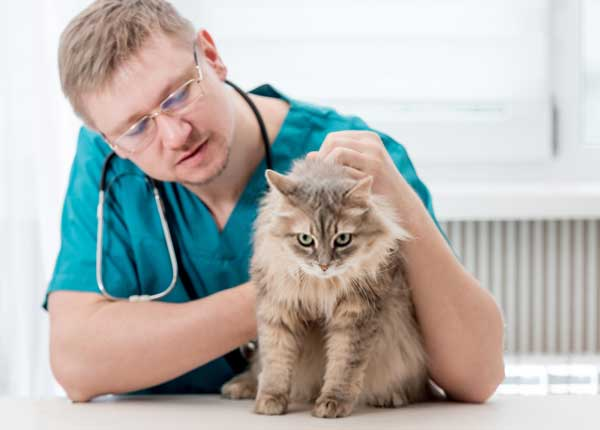 regular-visits-to-the-vet