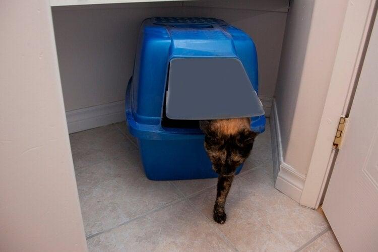 cat using covered litter box