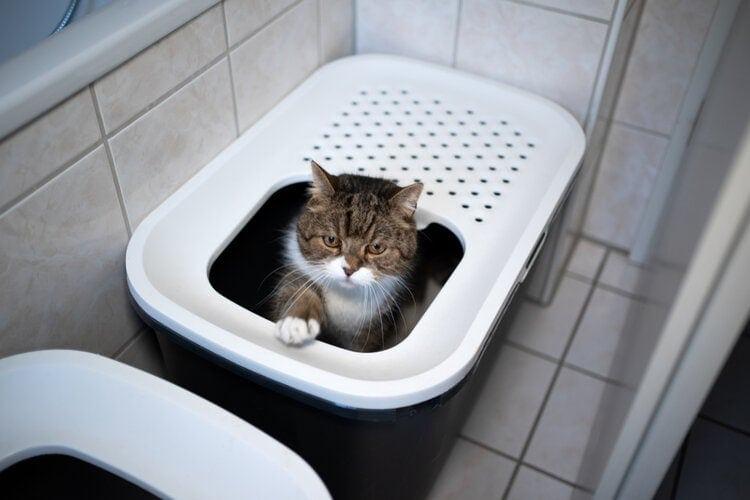 cat in bathroom litterbox