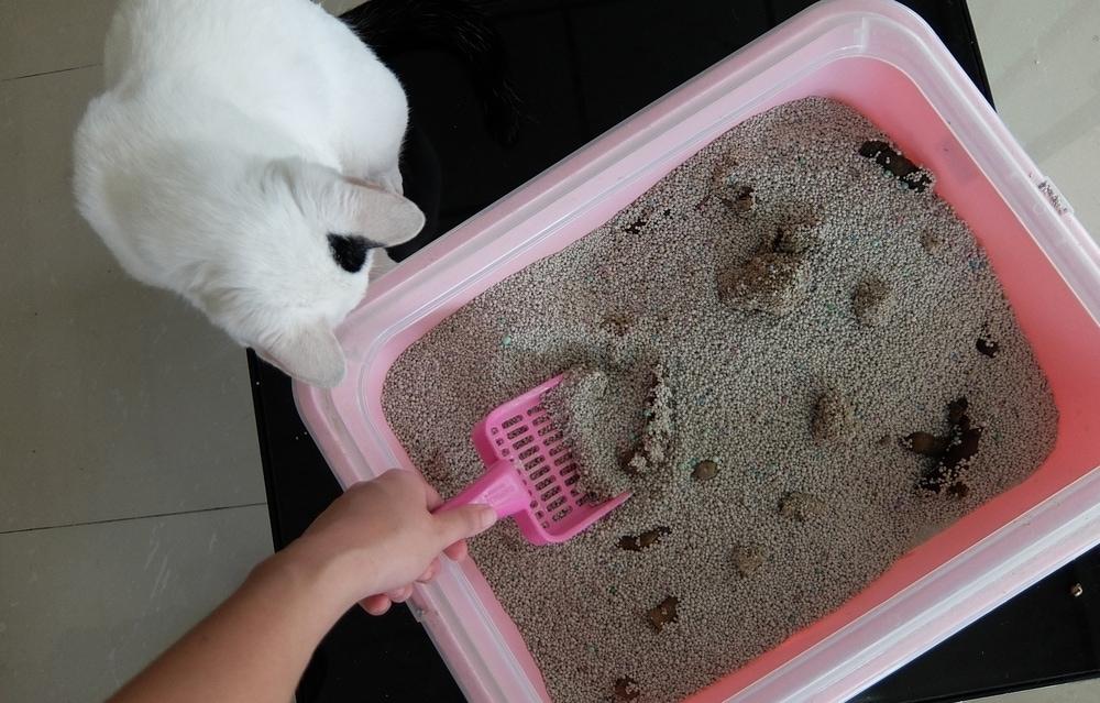 smelly dirty cat litter box_Ninotee, Shutterstock