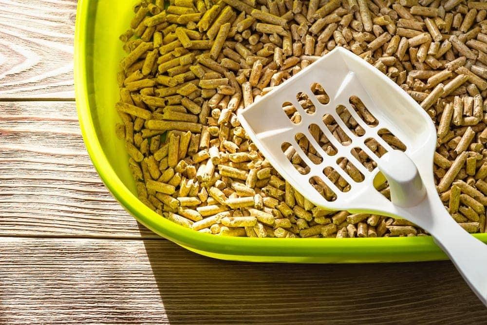 wood pellets in litter box_Maryia_K, Shutterstock