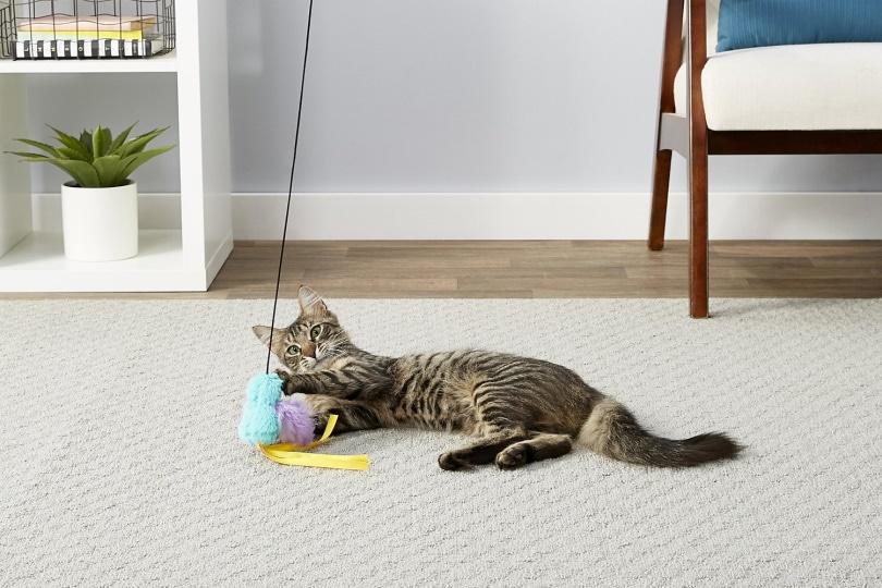 Frisco Bird Teaser cat toy_Chewy