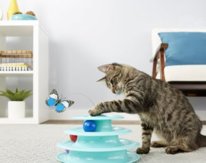 Frisco Butterfly Cat Toy_Chewy