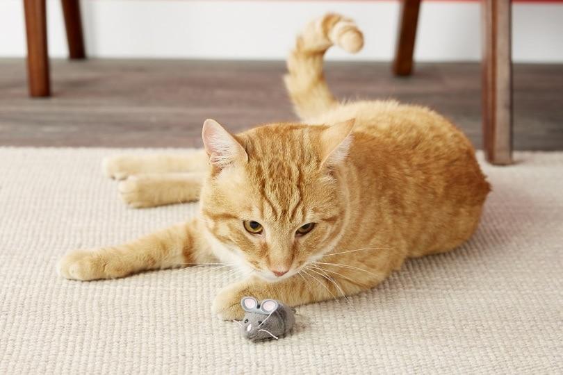 Hexbug Robotic cat toy_Chewy