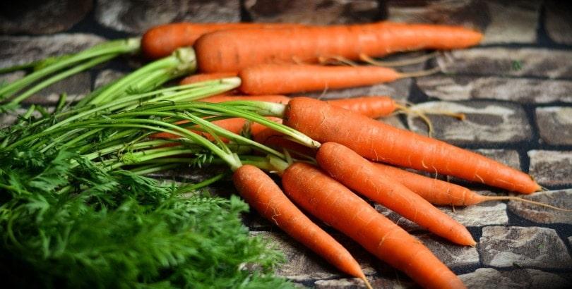 carrots_congerdesign_Pixabay